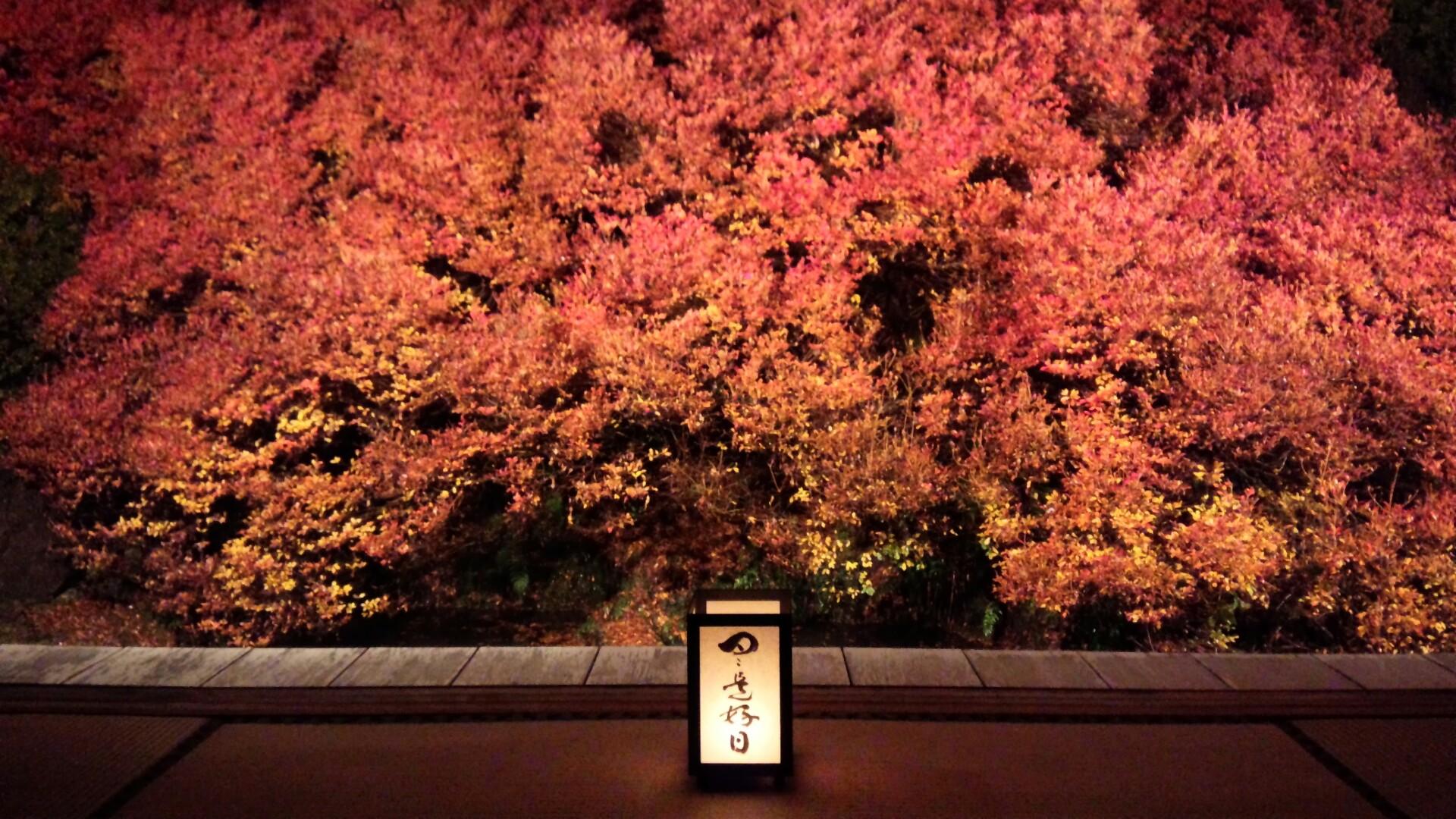 まるで日本画のような美しさ
